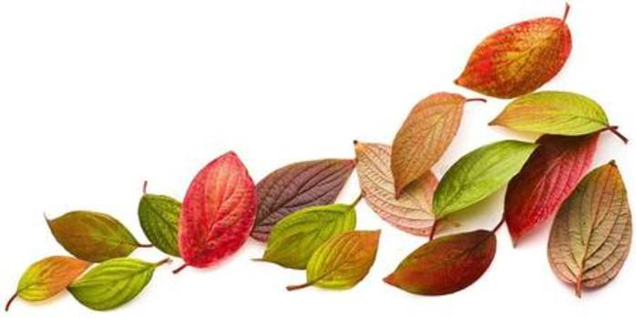 Bedtime Storytime Celebrate the Colours of Autumn