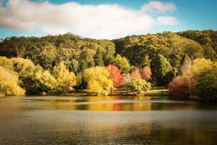 Mount Lofty Botanic Garden's 40th Birthday