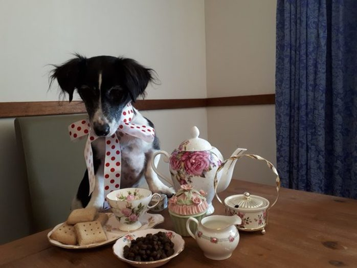 Puppy Tea Paw-ty